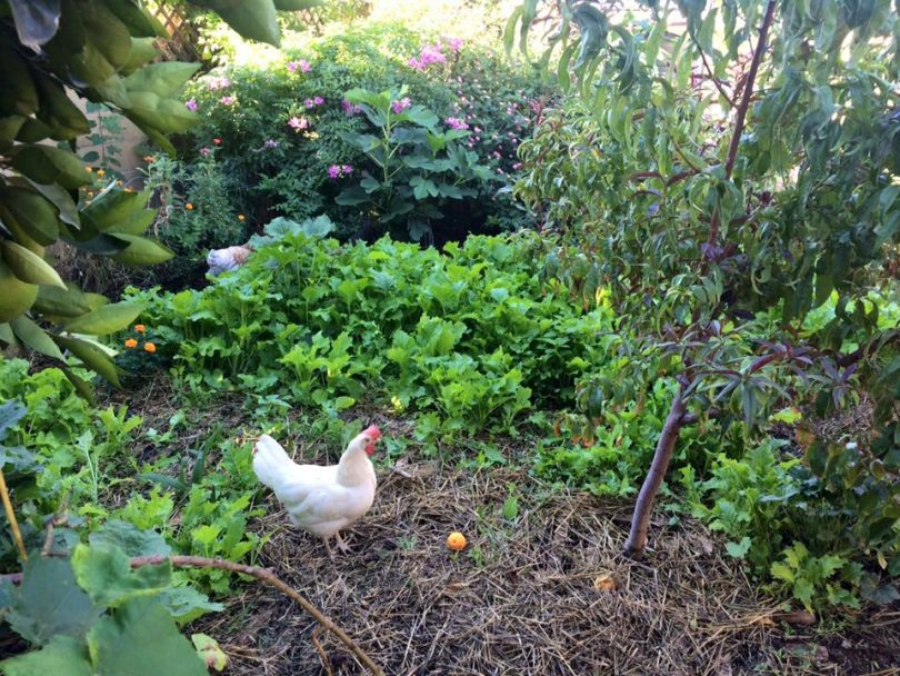 Los jardines comunitarios del patio trasero | Salvando el mundo, una cama de jardín a la vez!