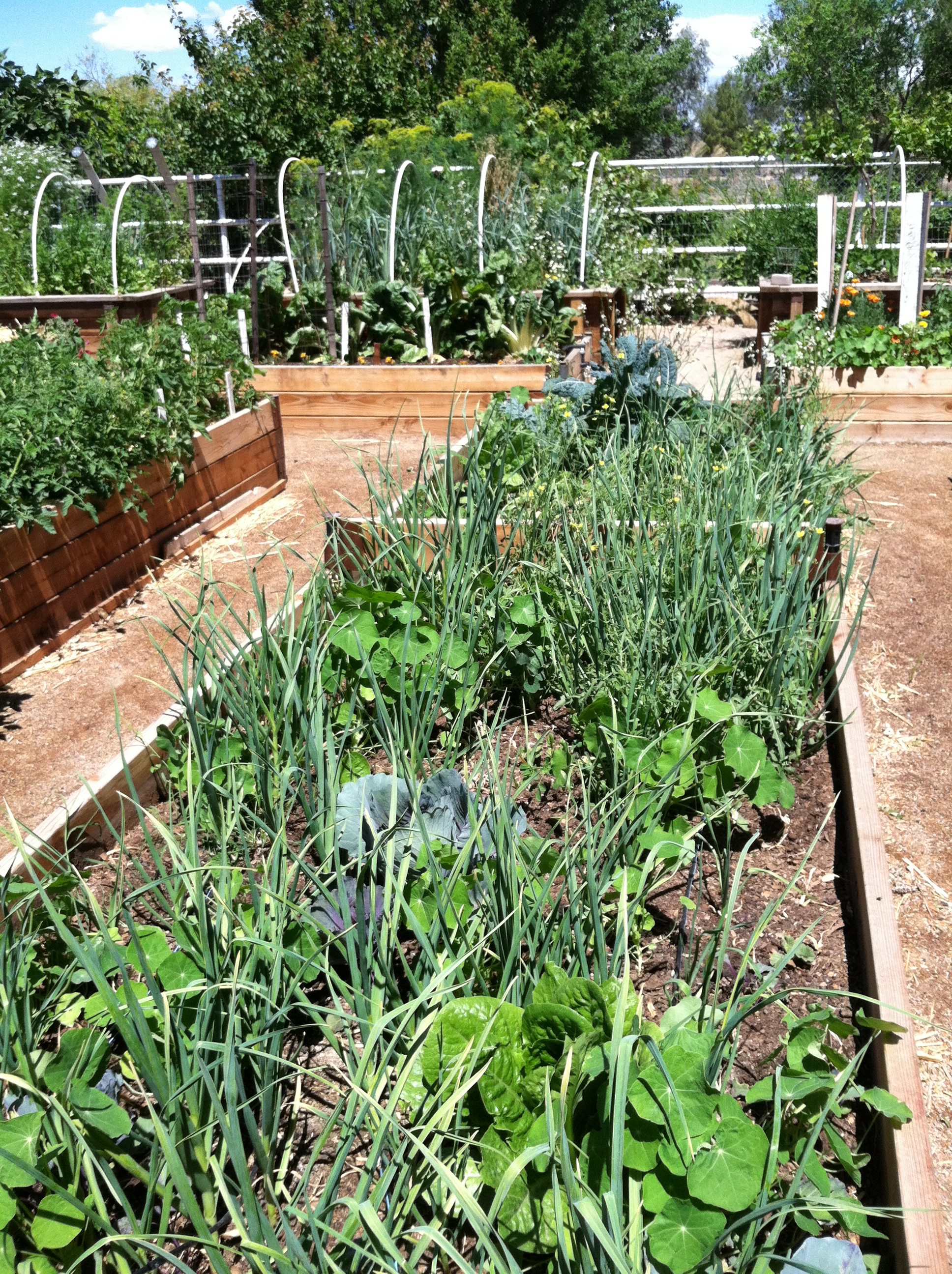 2013-vegie-beds-3-april
