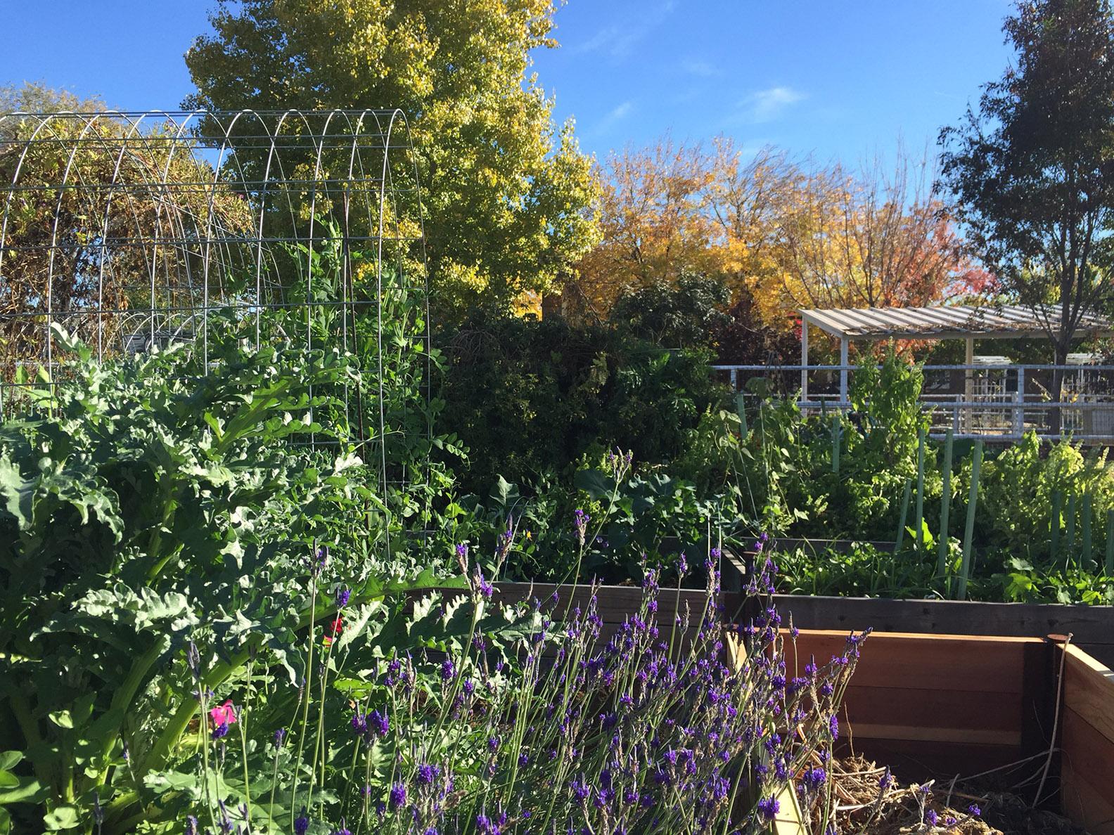2014-dec-vegie-garden