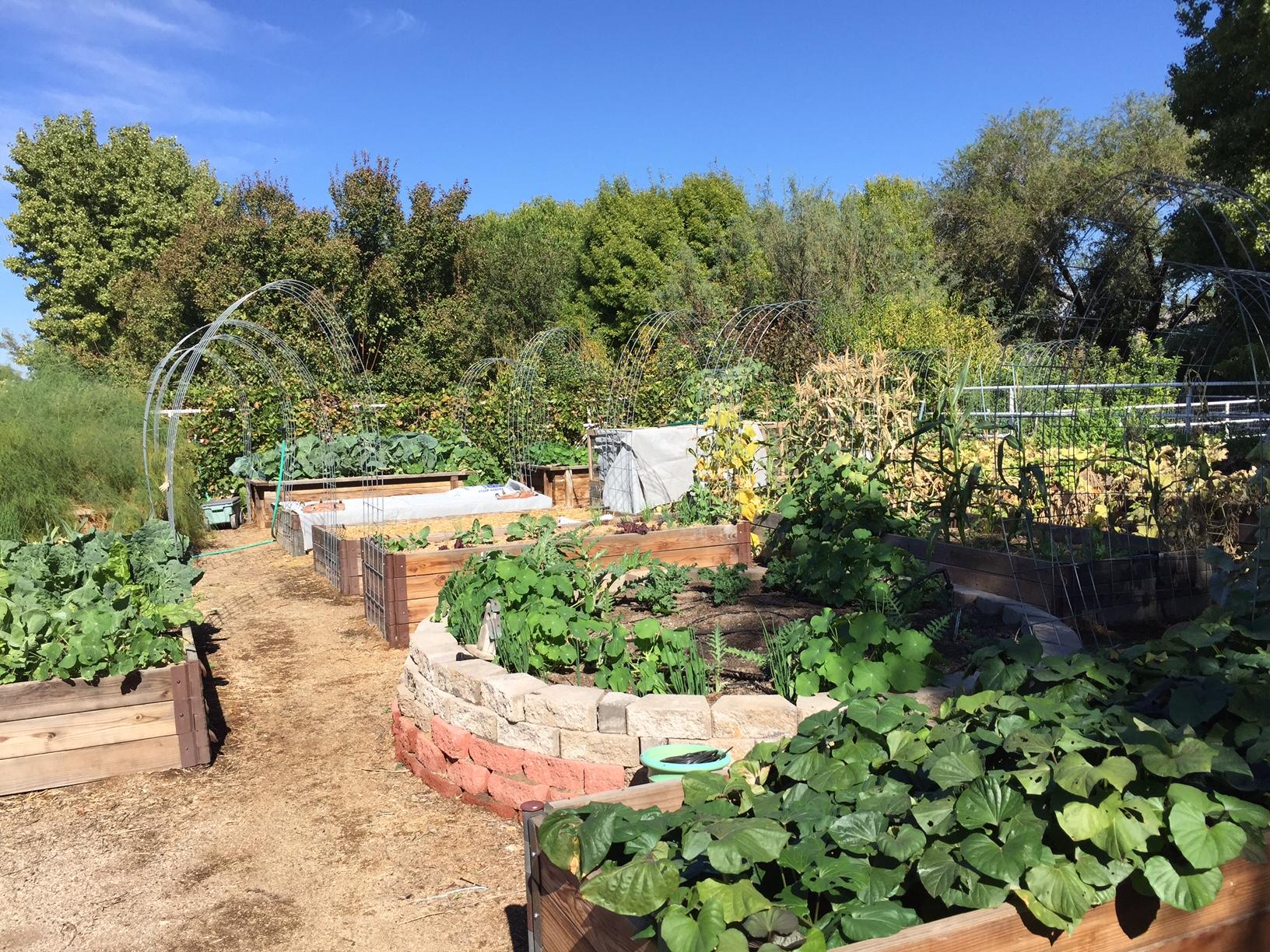 2016-vegie-garden