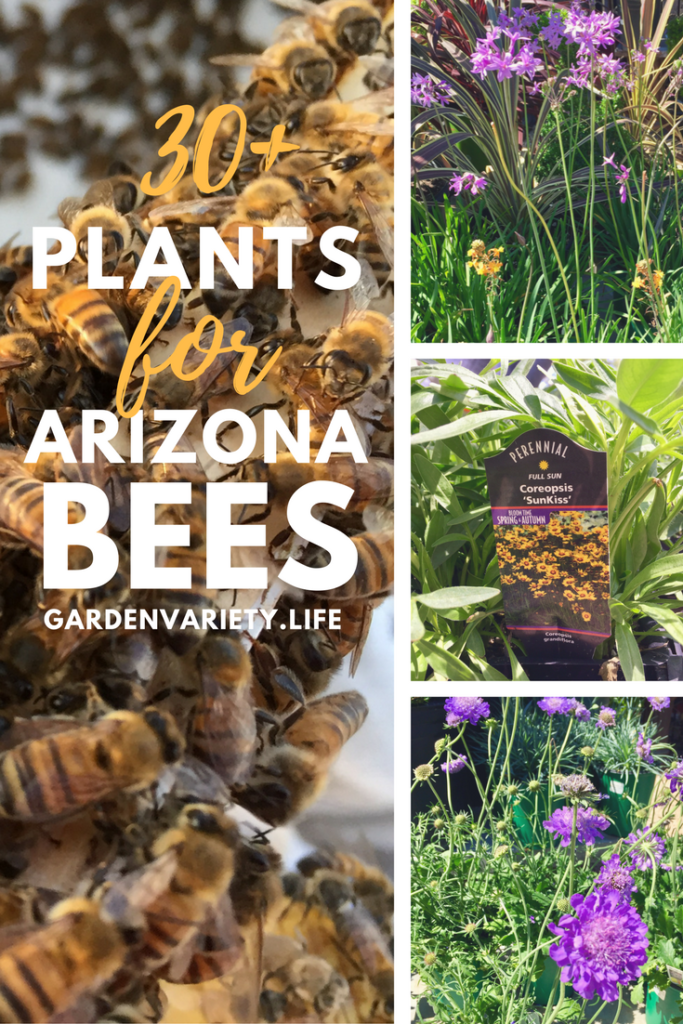 30+ Plants for Arizona Bees